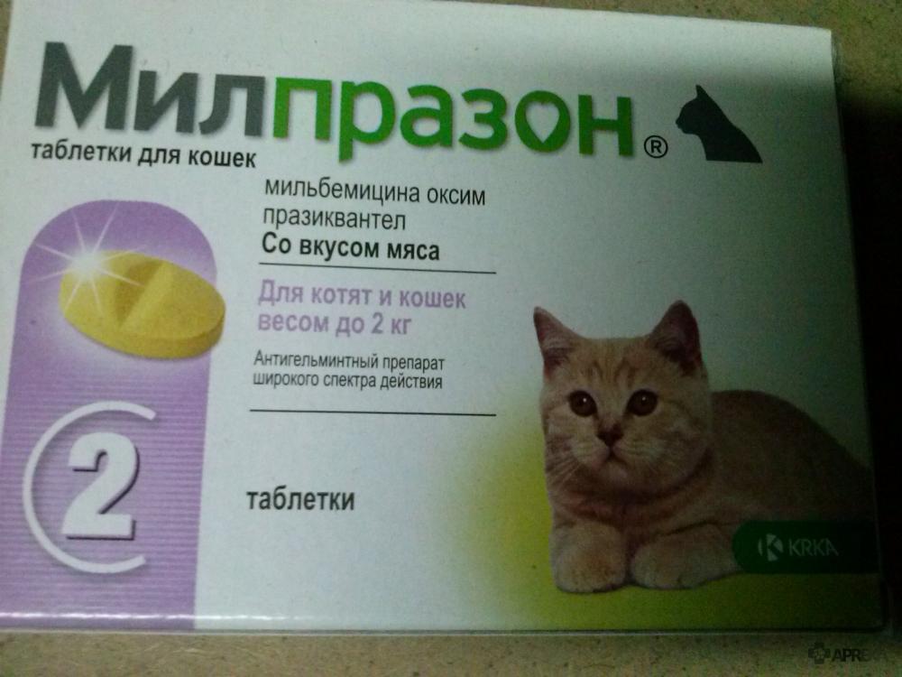 Марена красильная для котов: применение, противопоказания