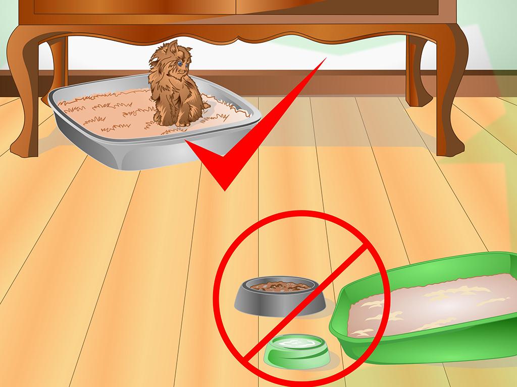 Как отучить кошку гадить в неположенном месте: проверенные способы и средства
