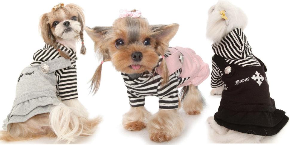 Обзор разновидностей и правила выбора переноски для собак