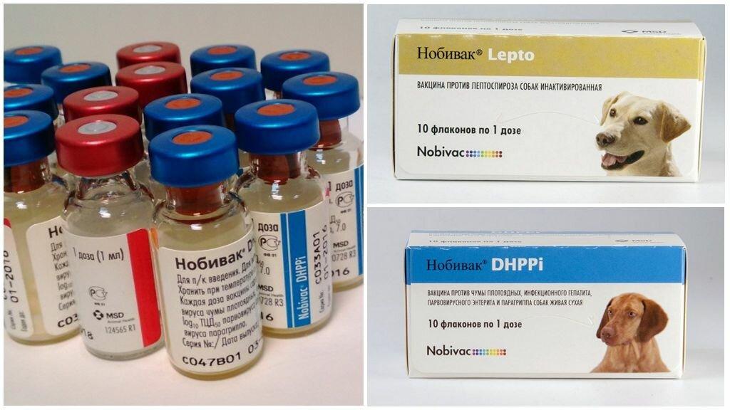 Коронавирус: вакцинация или эвтаназия животных