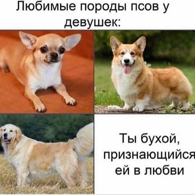 Самая дорогая собака в мире: какие топ 10 и 5 пород на земле и в россии с фото, ценами и названиями, сколько стоят щенки, а также красочные фотографии