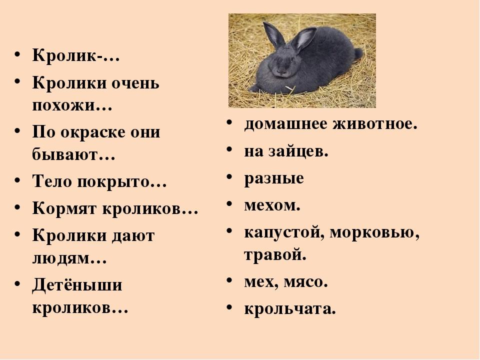 Имена кроликов девочек прикольные. как можно назвать крольчиху и кролика (388 кличек)