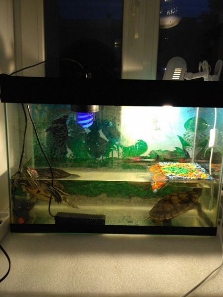 Как ухаживать за водяными черепахами: 9 шагов. водные черепахи в домашних условиях - уход, содержание