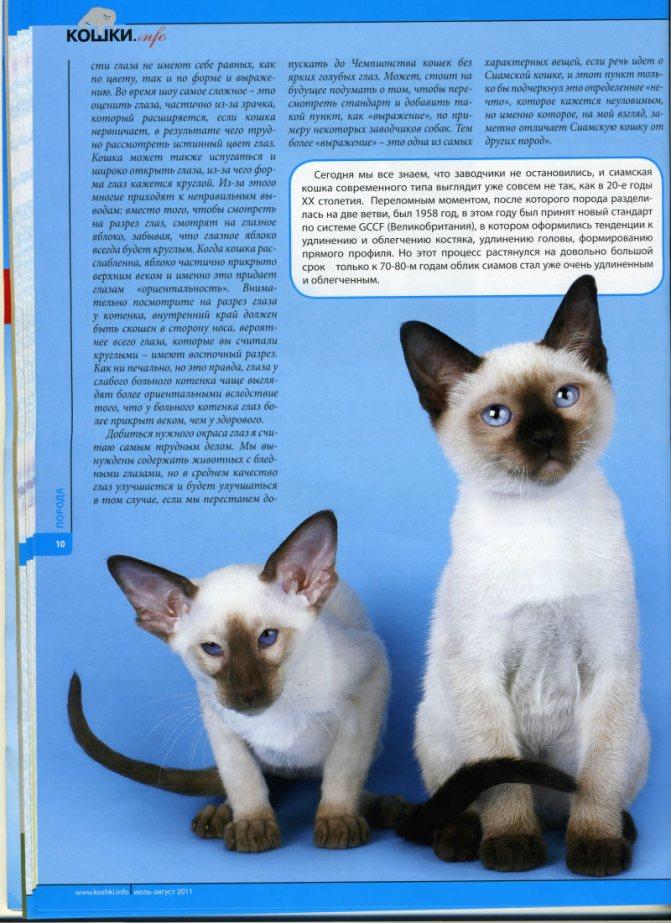 Сиамская кошка — описание разновидностей породы. интересные факты об уходе, содержании и кормлении
