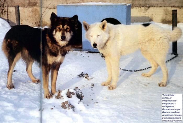 Ездовые собаки — 20 популярных пород во всём мире