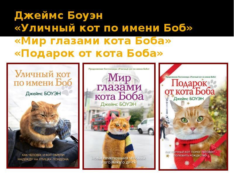 Как отличить уличного кота от домашнего