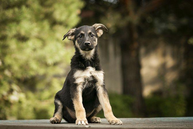 Кто определяет породу собаки