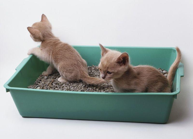 Как приучить котенка ходить в лоток с наполнителем и без него быстро, что делать