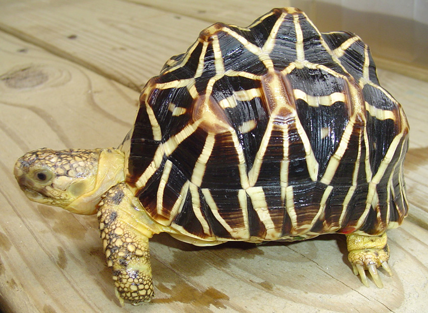 Сколько стоят черепахи, цены, где их можно купить
