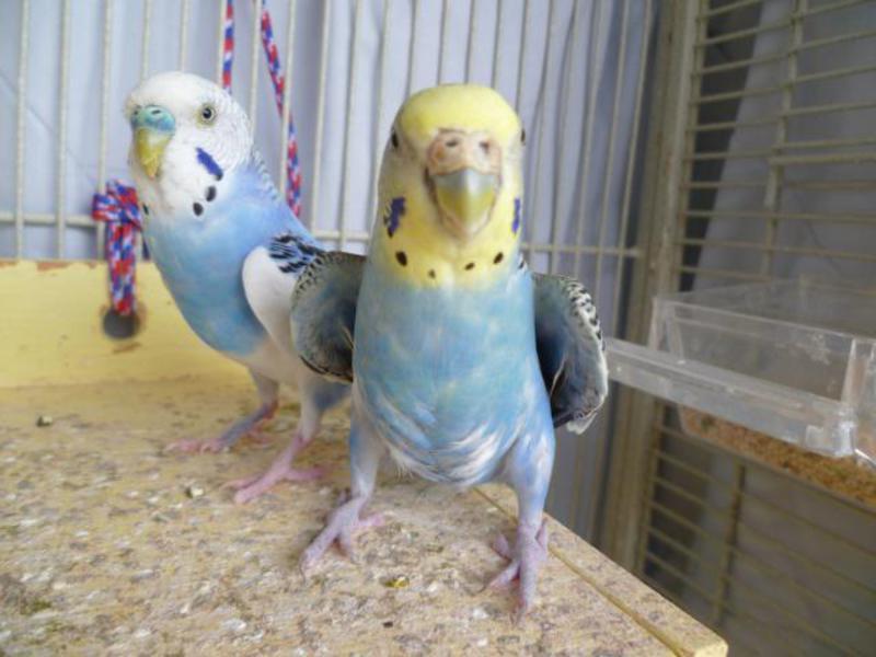 Как выбрать попугая - простые и полезные советы