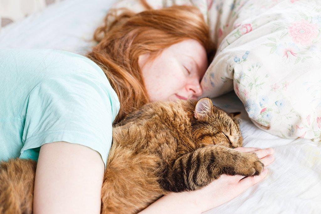 Почему нельзя будить спящую собаку