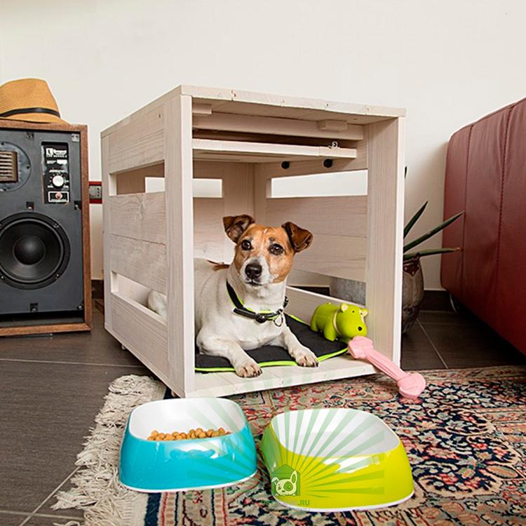 Лучшие породы собак для квартиры, топ-10 рейтинг собак 2021