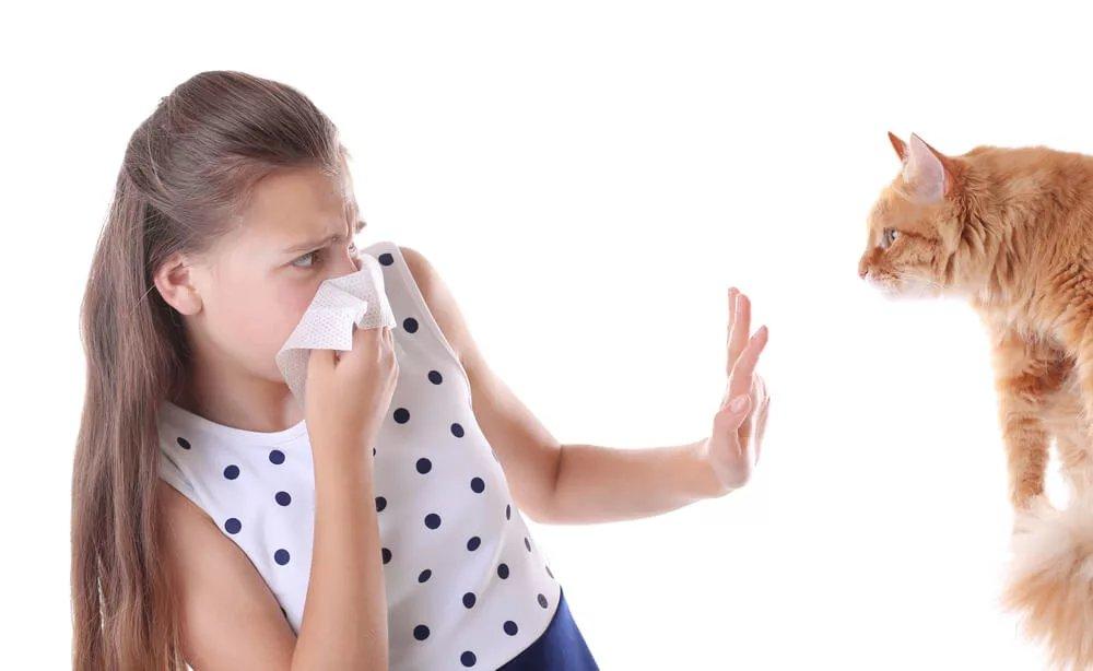 Будь здоров: что такое аллергия и как с ней бороться