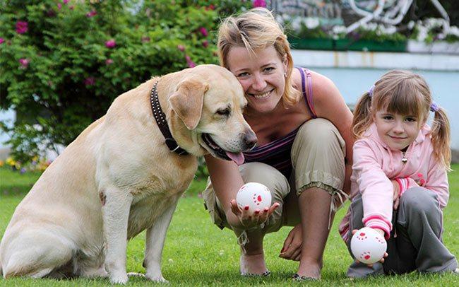 Самые лучшие породы собак для детей – топ-10 с фото и описанием