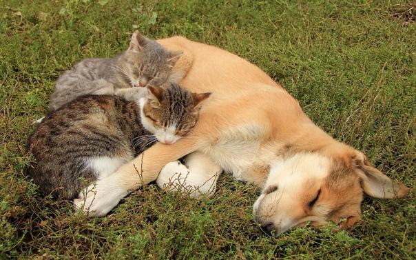 Как подружить кошку с котенком или котом - советы по совместному проживанию