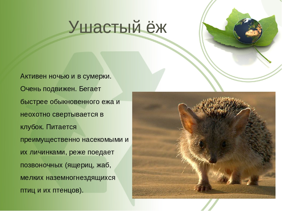 Ёж животное. описание, особенности, виды, образ жизни и среда обитания ежа