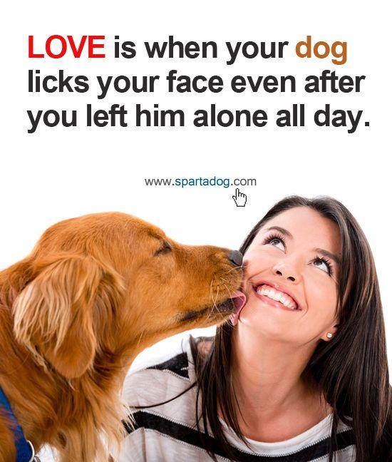 Собака лижет хозяина - причины и факты, которые нужно знать