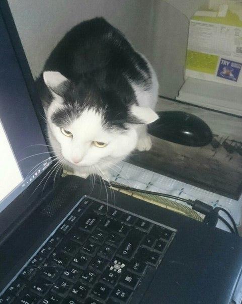 Приметы про кошек и котов в доме, поверья – если выпала из окна, укусила