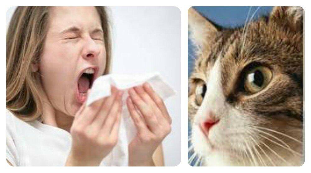 Как лечить аллергию на животных?