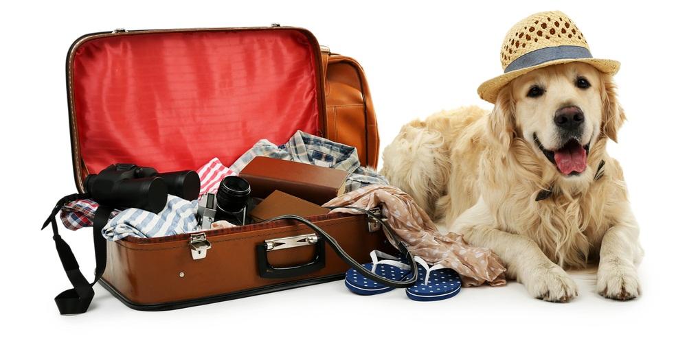 Зоогостиница, отель, гостиница для собак и щенков с дрессировкой в москве и подмосковье, условия, цены и отзывы