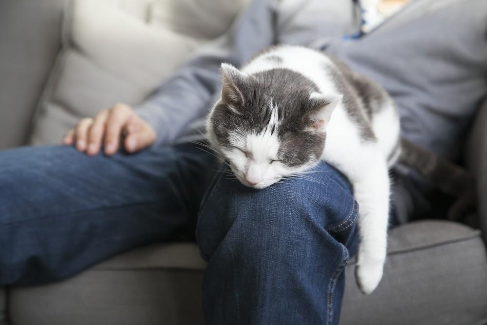 Признаки и причины почему кот грустит