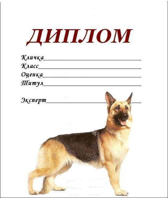 Как подобрать имя для своей немецкой овчарки