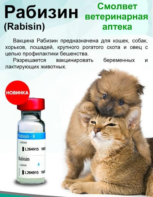 Стоимость ветеринарных услуг вмоскве