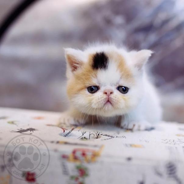 Пушистое чудо: фотографий удивительной красоты котов со всего мира (29 фото)