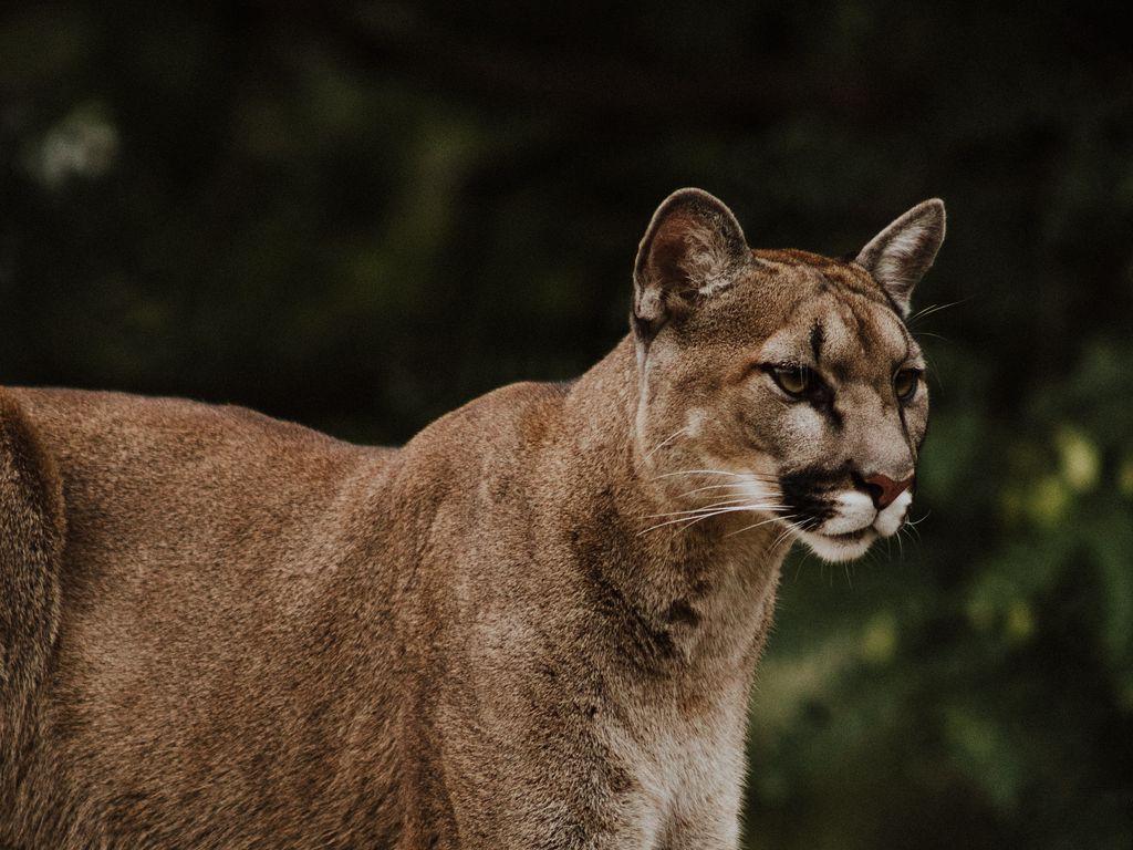 Чаузи — полное описание породы и характера кошки от а до я. топ-150 фото + интересные факты