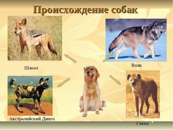 Сколько существует виды пород собак