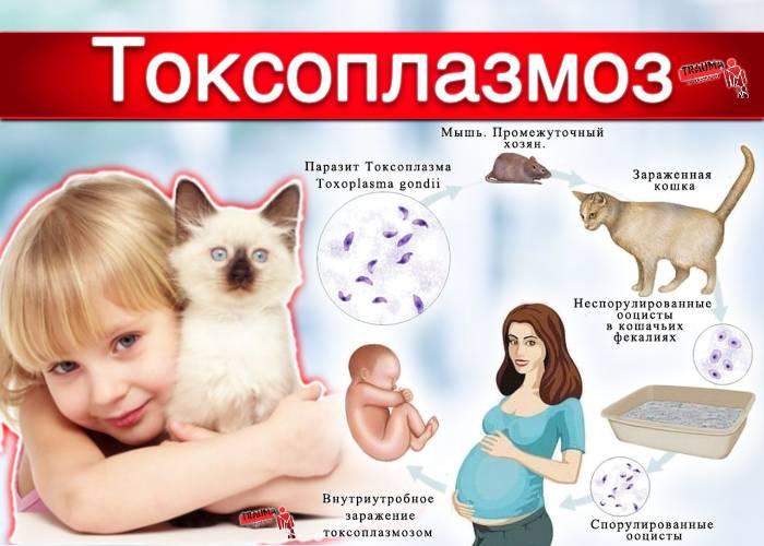 Лабораторная диагностика токсоплазмоза