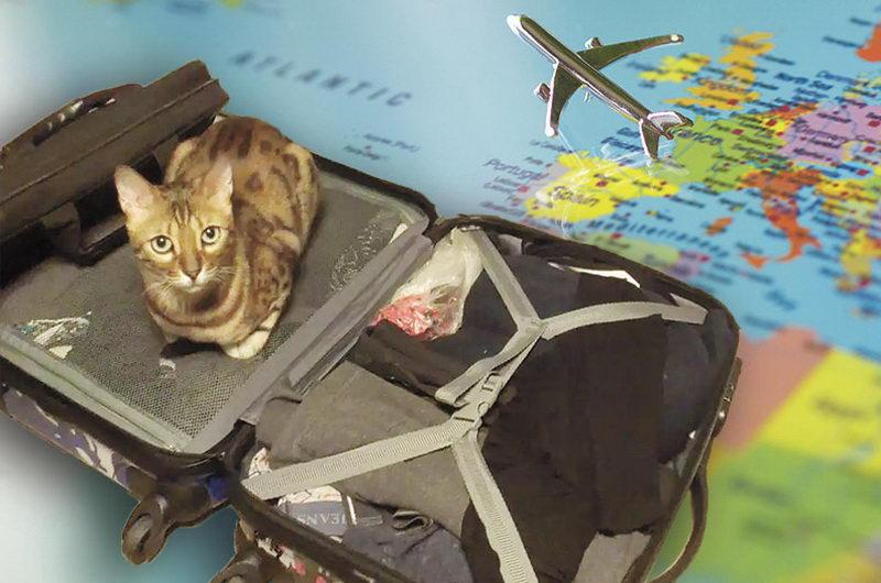 Где оставить собаку на время отпуска: передержка и другие варианты