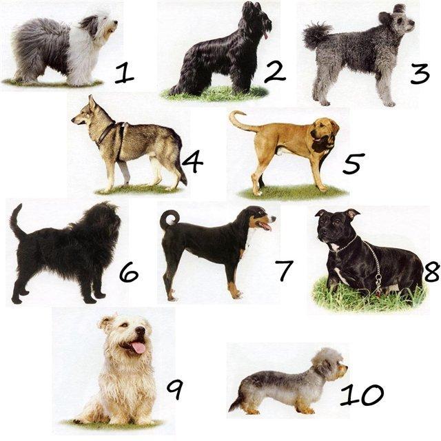 Где определить породу собаки?