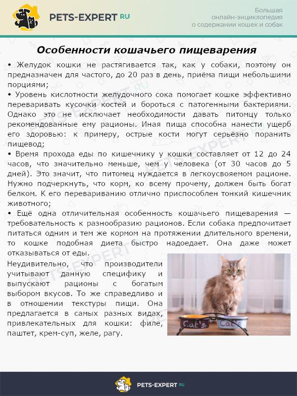 Понос у собаки: причины, виды, лечение   нвп «астрафарм»
