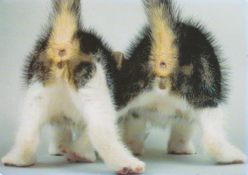 Как определить пол котёнка: эффективные методы