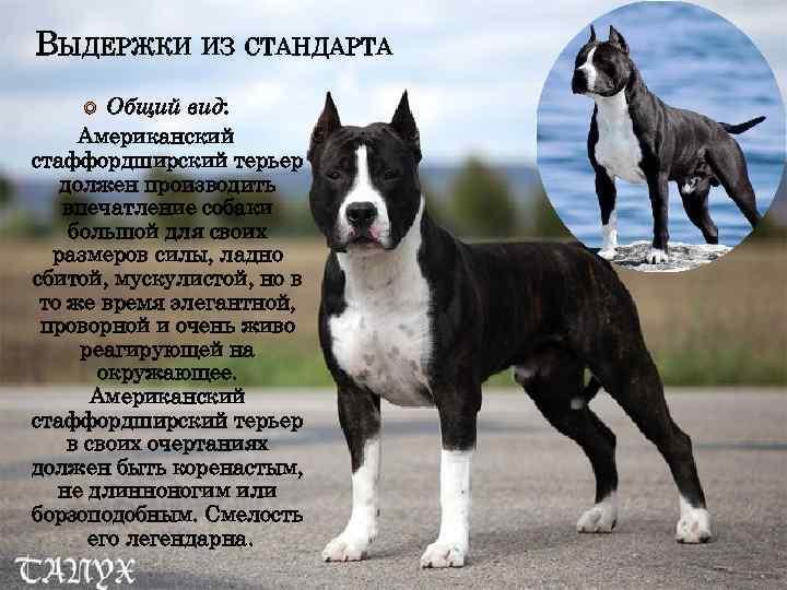 Бриар собака. описание, особенности, уход и цена породы бриар | sobakagav.ru