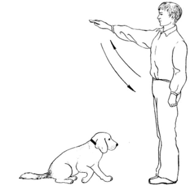 """Команда """"лежать!"""" как научить собаку понимать и выполнять команду"""