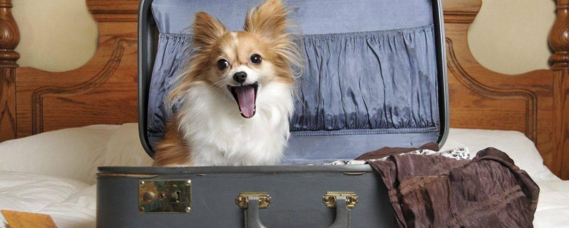 Где оставить собаку на время отпуска или внезапного отсутствия: 6 вариантов размещения питомца, подготовка, снятие стресса от долгой разлуки