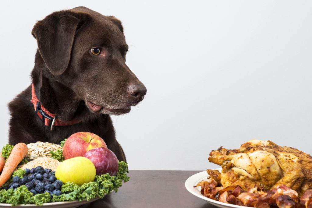 Что делать, если собака съела кость?