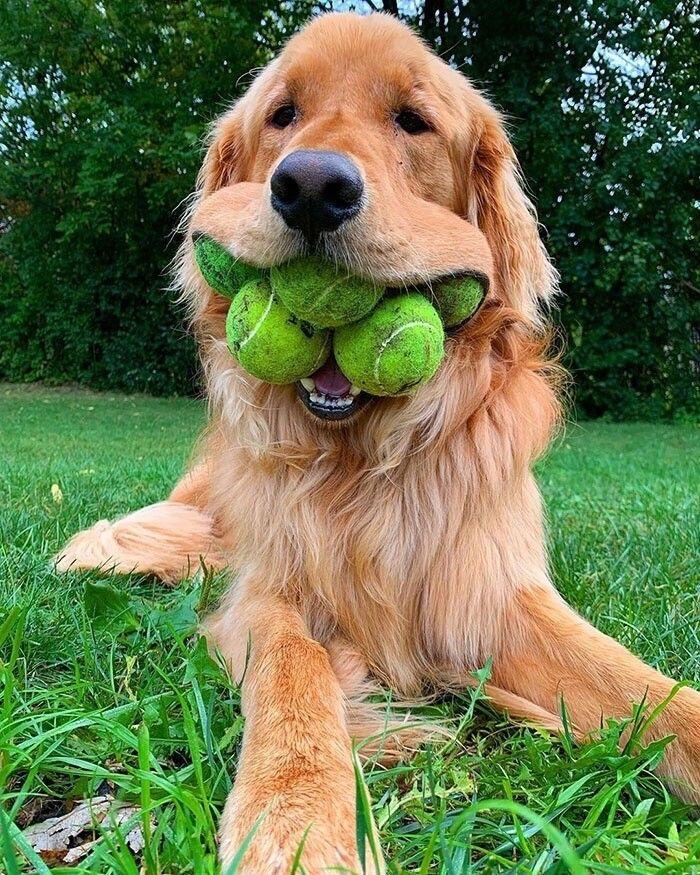 Рейтинг самых добрых собак на планете