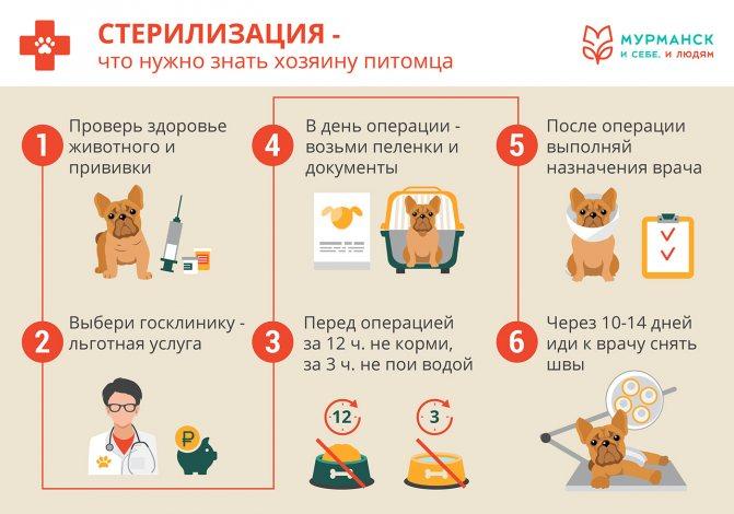 Прививки котятам: первая вакцинация, как правильно сделать, стоимость