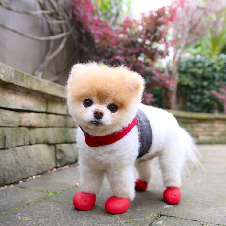 Топ самых маленьких пород собак