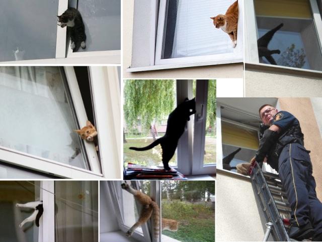 Как отвадить котов со двора частного дома подручными средствами