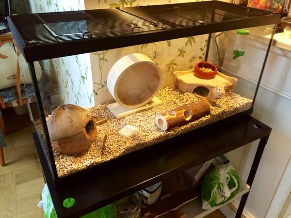 Террариум для улиток: изготовление аквариума для ахатин своими руками, советы по декоративному оформлению