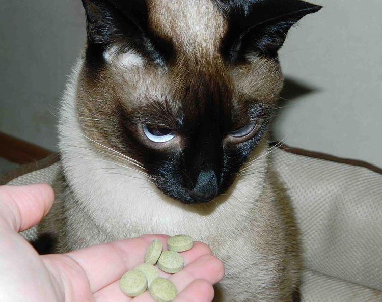 Все о дегельминтизации кошек и котят, лечебные и профилактические меры