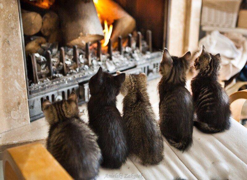 Люкс для кота: где в иркутске оставить питомца на время отпуска