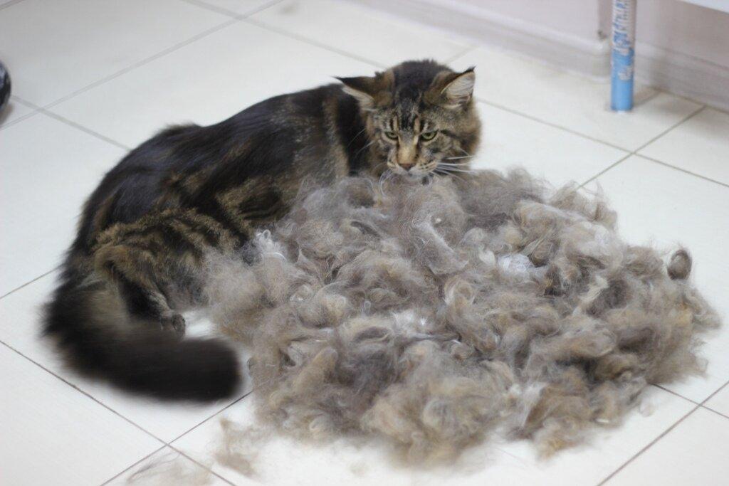 Что делать, если кот или кошка сильно линяет? причины и советы