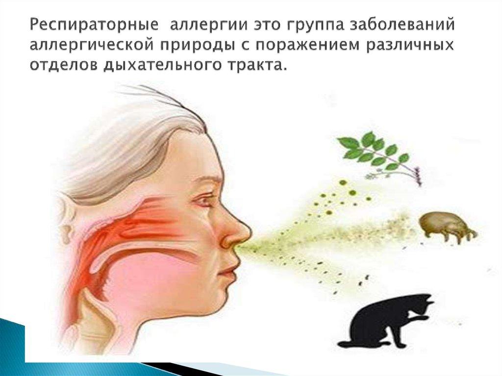 Аллергия на животных у детей и взрослых: симптомы, причины, лечение - статьи медцентра верамед