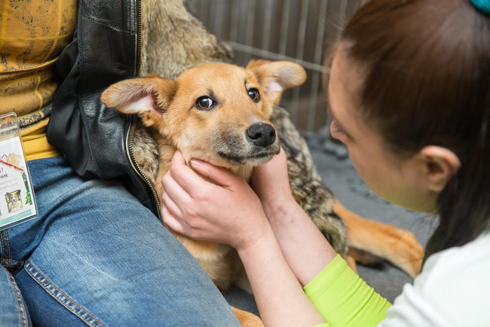 6 вещей, которые нужно знать перед тем, как взять собаку из приюта