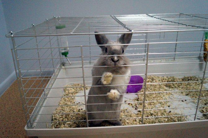 Как ухаживать за кроликами в домашних условиях?